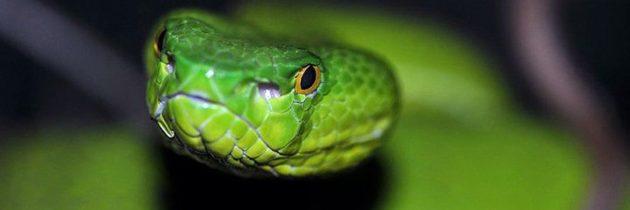 Disinfestazioni Serpenti