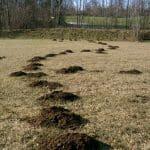 Foto di buche scavate dalle talpe in giardino