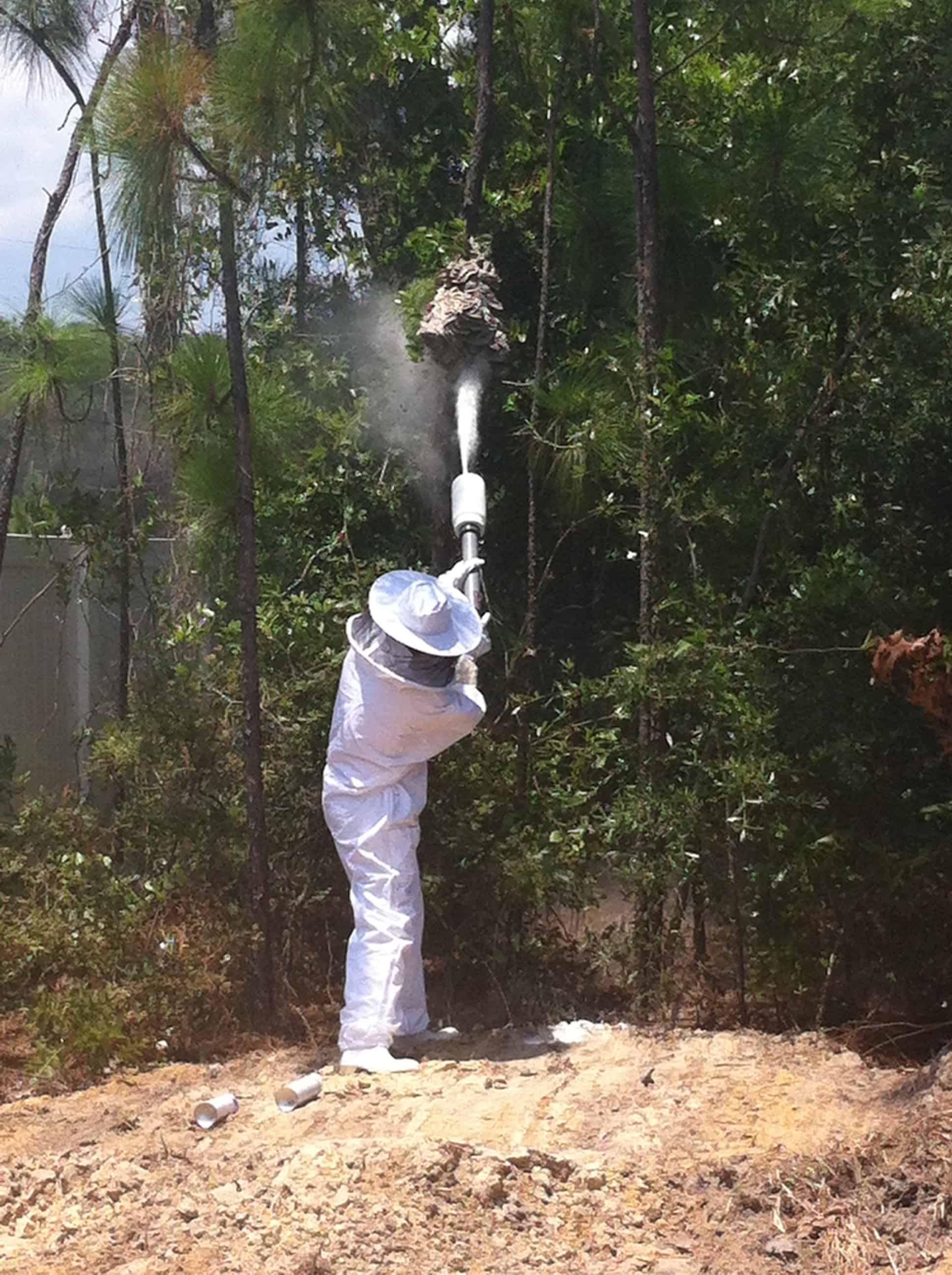 rimozione alveari vespe